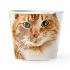 MyFacepot Animal_Red_Cat