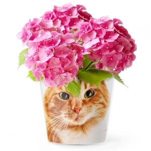 MyFacepot Animal_Red_Cat