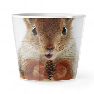 MyFacepot Animal_Squirrel